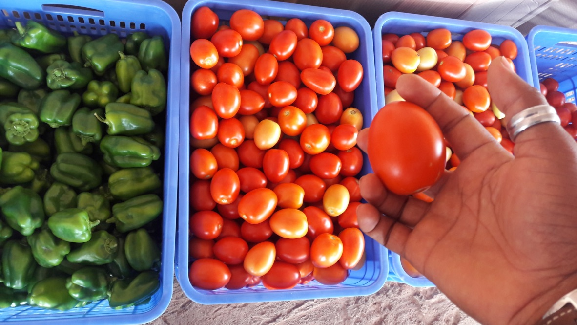 Fresh Greenhouse Tomatoes and Green Pepper from Kartlos Farms Limited Ibadan Nigeria